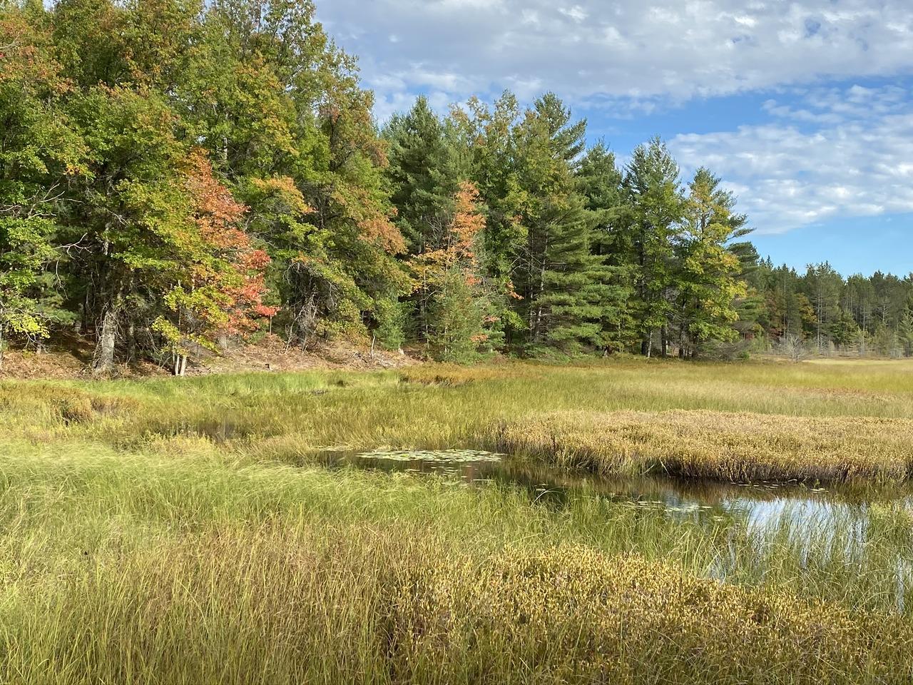 Grassy Lake Woods